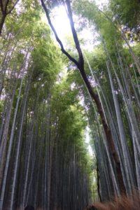 Bambuswäldchen am Sturmberg (Matsuo Basho war hier!) © Leopold Federmair